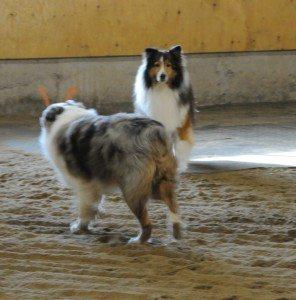 Dec 7-15 dogs 012