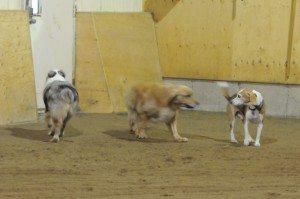Dec 7-15 dogs 013
