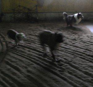 Dec 7-15 dogs 001