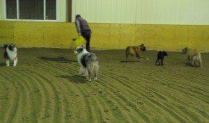 Dec 7-15 dogs 004
