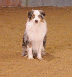 Dec 7-15 dogs 009